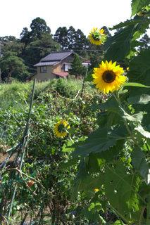 45_畑 2009-09-06 0-37-09.jpg