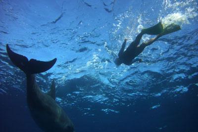 イルカと泳ぐ人々