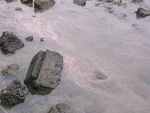 サンゴの産卵 07