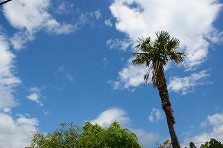 天気20080704-2