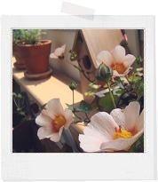 * natural junk garden *