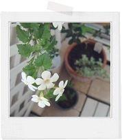 * white garden *