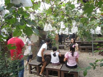 ブドウ園4