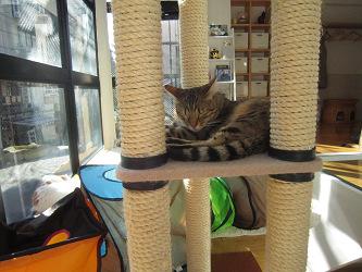猫カフェ7