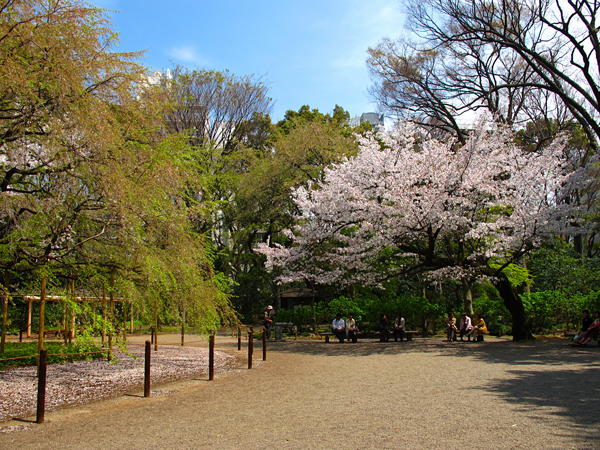 桜☆六義園