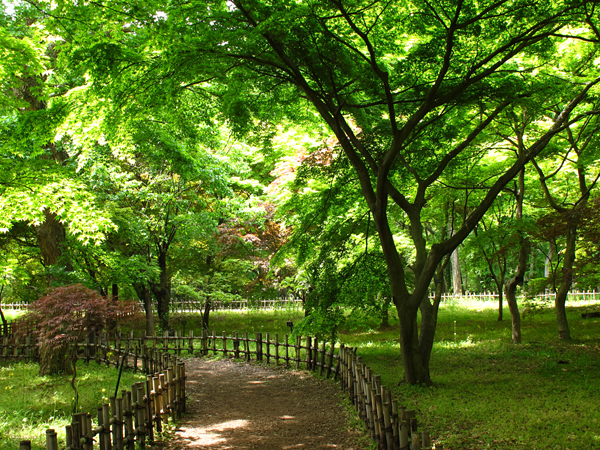 カエデ園☆神代植物公園