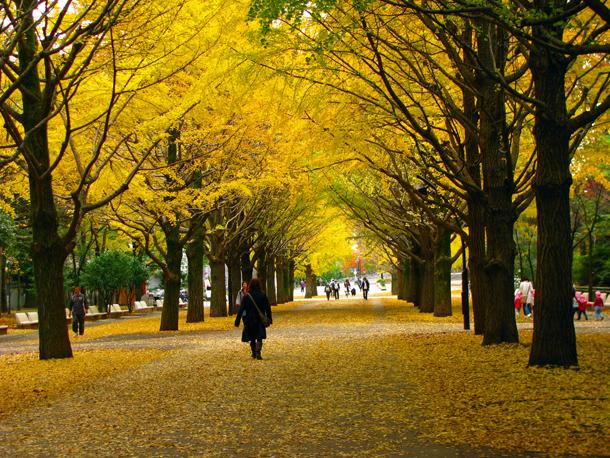 光が丘公園☆銀杏並木