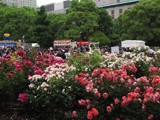 バラ花壇☆日比谷公園