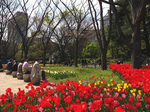 満開!チューリップ☆日比谷公園