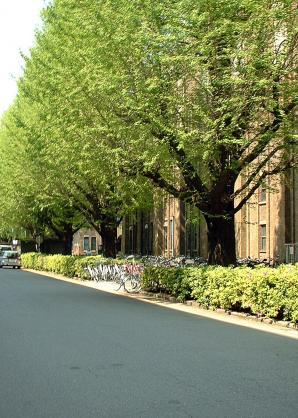 東大法学部前の通り.jpg