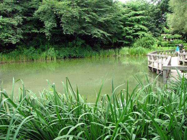 姿見の池☆国分寺市西恋ヶ窪