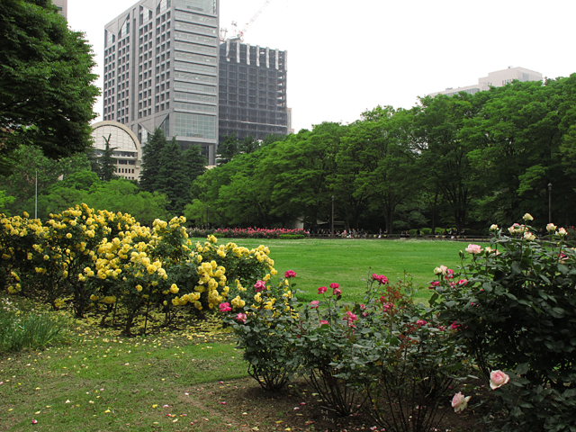 バラ花壇☆旧古河庭園