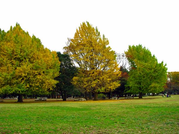 光が丘公園☆紅葉