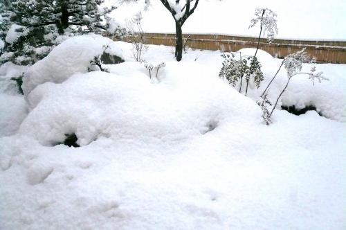雪090113