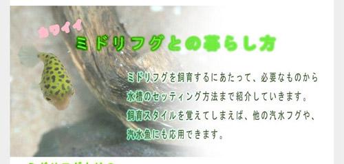 midorifugu.jpg