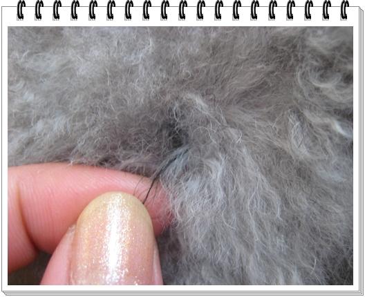 ナゾの毛3