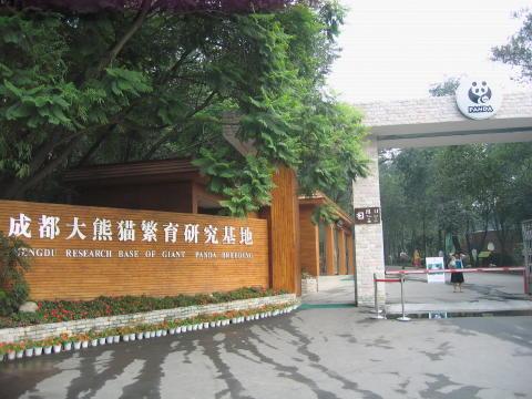 成都パンダ研究所1