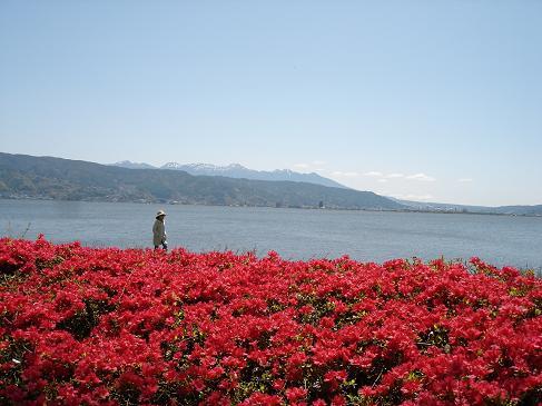 ツツジと諏訪湖ー1.JPG