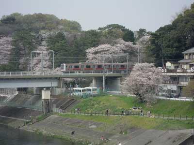 201-多摩川.jpg