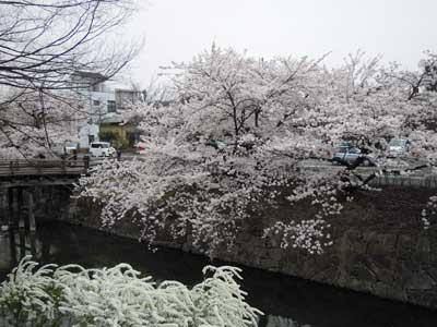 008-桜.jpg