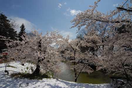 206-桜.jpg