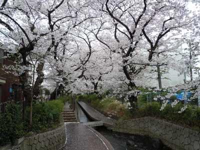 001_武蔵小杉.jpg