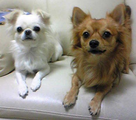 レオ&ユキ