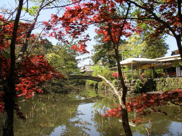 宇佐神宮 菱形池周辺 4月