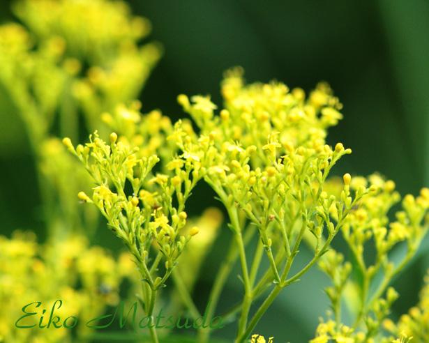072植物園name.jpg