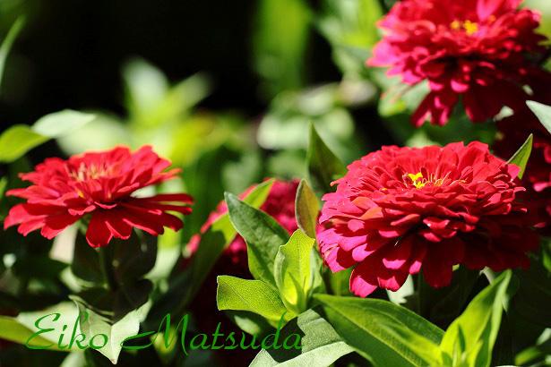 010植物園nmae.jpg