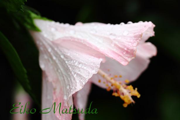 058植物園nmae.jpg