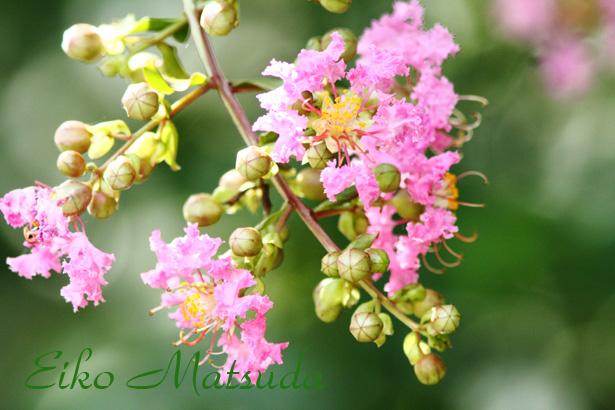 023植物園nmae.jpg