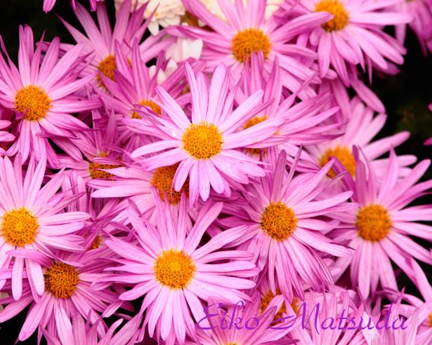 014植物name1.jpg
