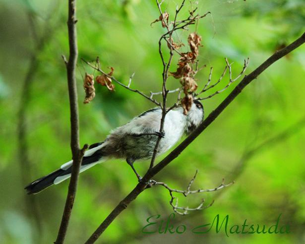 039植物園-(2)name.jpg