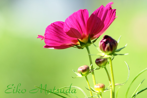 061植物園nmae.jpg