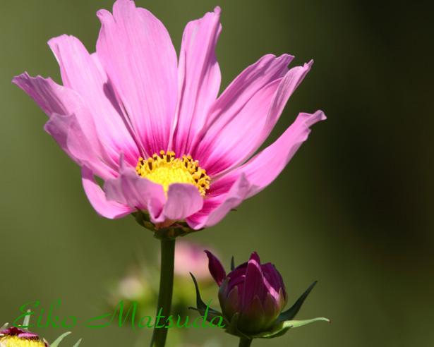 072植物園nmae.jpg