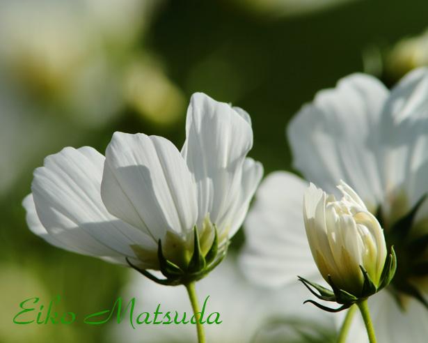084植物園nmae.jpg