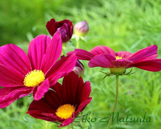 108植物園NAME.jpg