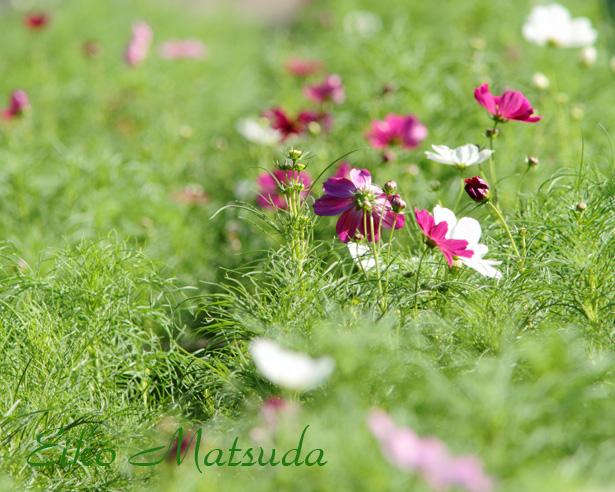 093植物園nmae.jpg