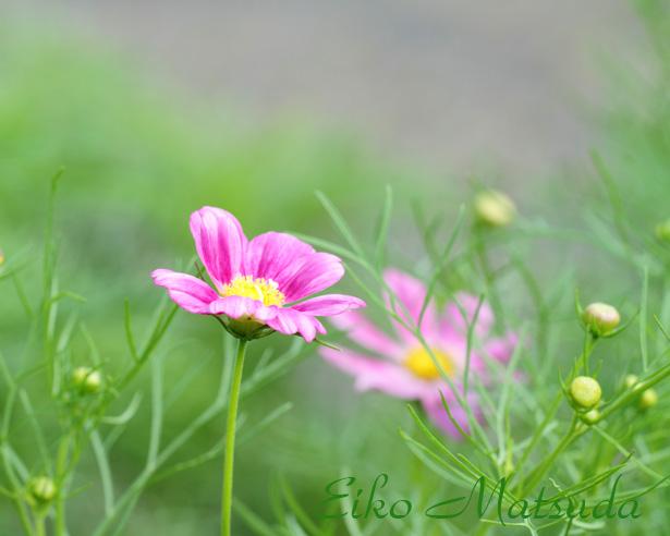 048植物園nmae.jpg