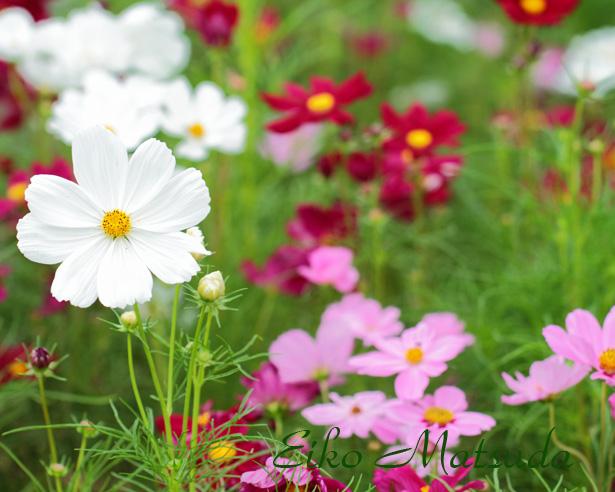 069植物園1name.jpg