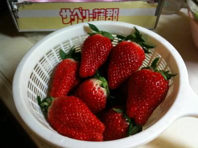 蒲郡のイチゴ