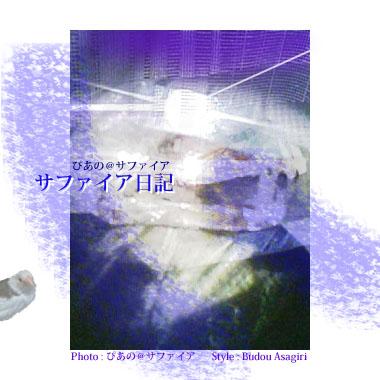サファイアポスターー060221