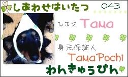 社員証-Tama