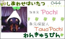 社員証-Pochi