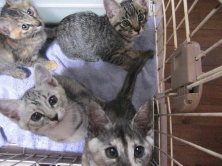 4匹の仔猫