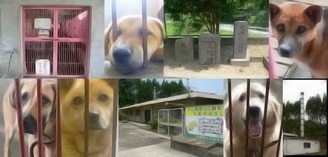 宮崎中央犬管理所