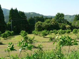 20110514f.jpg