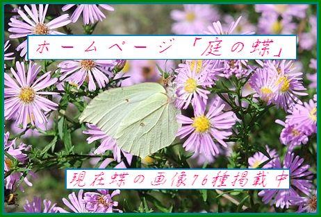庭の蝶ポスター2.jpg