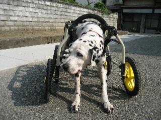 四輪車椅子2
